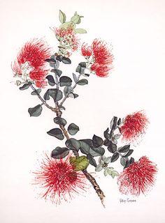 Antique Old Color Botanical Art Print Ohi'A Lehua Pele's Flower Hawaii RARE   eBay