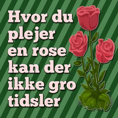Hvor du plejer en rose kan der ikke gro tidsler.
