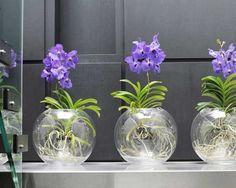 Centre de table orchidées vanda