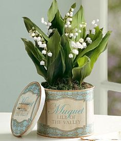 The Lily of the Valley Bulb Garden comes with this chic vintage tin.