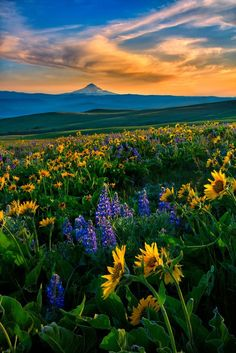 Wild Flowers Inspiration : Columbia Hills Spring by Michael Brandt on - Flowers.tn - Leading Flowers Magazine, Daily Beautiful flowers for all occasions Beautiful World, Beautiful Places, Landscape Photography, Nature Photography, Nature Aesthetic, Nature Wallpaper, Nature Pictures, Amazing Nature, Pretty Pictures