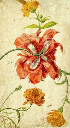 stilllifequickheart:  Jan van Huysum  Flower Study  18th century