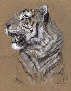 Tiger by Vermin-Star on DeviantArt Animal Sketches, Animal Drawings, Art Sketches, Art Drawings, Pencil Drawings, Tiger Drawing, Tiger Art, Big Cats Art, Cat Art