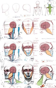 Michael Hampton tuts #Anatomytutorial