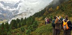Hirschbrunft im Sellrain Innsbruck, Mountains, Nature, Blog, Travel, Mountain Climbing, Alps, Nice Asses, Naturaleza