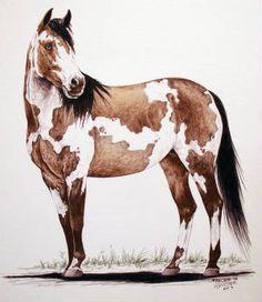 Paint Horse Pencil Drawings | Paintings