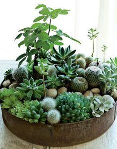 Plantas que sobrevivem                                                                                                                                                      Mais