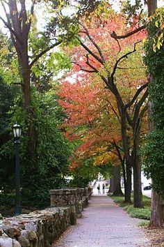 Autumn on Franklin Street in Chapel Hill