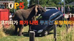 화가난 코끼리 제어불능 TOP5 Angry elephant out of control TOP5