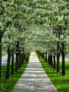 I want a row of trees to walk under. What a happy feel.