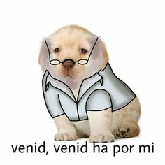 memes sabor a pomelo suave ༄ Cute Funny Animals, Funny Dogs, Funny Images, Funny Pictures, I Need Friends, Pokemon, Spanish Memes, Sad Day, Dog Memes