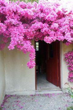 Bougainvillea - i love it everytime Pretty In Pink, Pink Flowers, Beautiful Flowers, Beautiful Gardens, Nail Swag, Tropical Garden, Dream Garden, Garden Landscaping, Bonsai