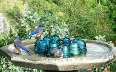 Insulator Bird Bath