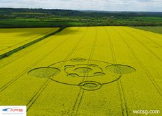 New Crop Circle in U.K.  - #cropcircles