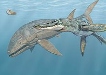 Pliosaurus - Wikipedia, la enciclopedia libre