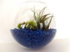 Weekend Project Alert: 20 DIY Terrariums to Inspire You via Brit + Co.