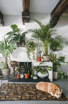 house flowers indoor 296463587965238563 - Un appartement jungle – PLANETE DECO a homes world Source by lillyrosed Jungle Decorations, House Decorations, Christmas Decorations, Salons Cosy, Decoration Plante, Asian Decor, Plant Wall, Desk Plant, Cozy Living Rooms
