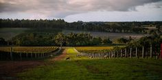 Swan Valley, Perth, WA--been there! Perth Western Australia, Visit Australia, Countries To Visit, Nova Scotia, Melbourne, Vineyard, The Incredibles, River, World