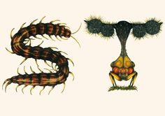 This Insect Alphabet Took Me 2 Years To Complete   Bored Panda