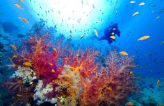 10 Great Scuba Diving Locations (including this one, The Red Sea)