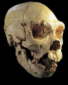 "homo_heidelbergensis? Possible a subpecies from ""the pit of bones' in Spain 300,000BC approx"