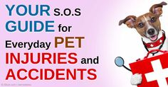 Here are 8 easy tips you can try when treating minor pet injuries and illnesses.
