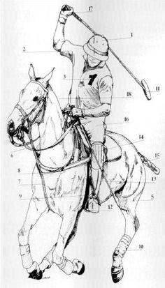 equipación de polo, indumentaria y accesorios