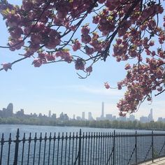 jacqueline kennedy onassis reservoir at Central Park New York Street, New York City, Williamsburg Bridge, Flatiron Building, Jacqueline Kennedy Onassis, Bryant Park, New York Photos, West Village, Central Park