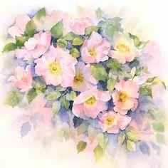 Dog Roses by Rachel McNaughton
