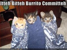 30 Precious Little Animals Wrapped Up Like Burritos. This Is RIDICULOUSLY Cute!