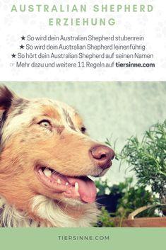 Australian Shepherd Tips Australian Shepherds, Australian Shepherd Training, Puppy Training Schedule, Dog Training, Training Classes, Dog Barking, Dog Agility, Dog Crate, Working Dogs
