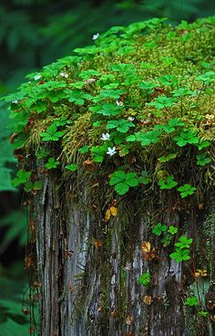 chasingthegreenfaerie:    Moss and flowers by MizMagee on Flickr.