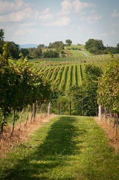 Dog-friendly, Barrel Oak Winery, Delaplane, VA, Fauquier County. Located right off I-66 in the Northern Virginia, Washington, D.C. Metro area.