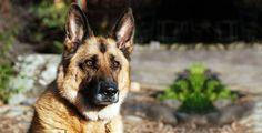 Teneri cuccioli Notizie: Un cane chiama soccorsi e salva il padrone/LEGGI