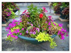 100 Container Garden Ideas For Arkansas, Texas, Tennessee and The South, Part 3 Jonesboro | Memphis | South Lawn Care Landscape Jonesboro Garden Flowers Container Gardens Best Flowers For Container Gardens BadAsFlowers Arkansas Garden Annuals
