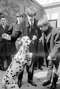"""the beatles on set with a dalmatian...I think the dog was looking at John's hand and thinking """"Give Peace a Chance"""""""