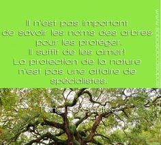 citation arbre ecologie
