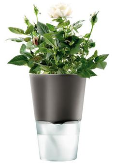 avec réserve d'eau Blumentopf mit Wasserreservoir – klein…