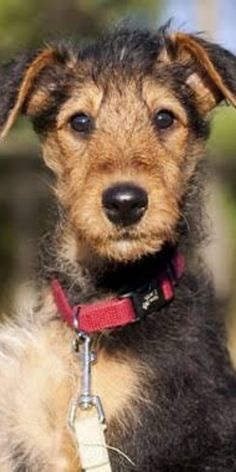 When it comes to adopting a pet, we all know that the Cutest Dog Breeds are on the top of this list. #breedingdogs #cooldogbreeds #differentdogbreeds #cutestdogbreeds #petdogsbreeds #dogbreedsmix #breedsofdogs #dogsandpuppies #cutedogs Cute Dogs Breeds, Dog Breeds, Different Dogs, Best Dogs, Dogs And Puppies, Adoption, Things To Come, Pets, Top