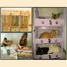 Caminha de gato =)  Via:http://www.facebook.com/planetarecicla