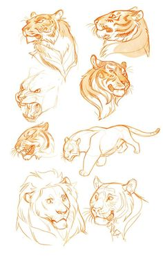 practice sketches by on - -Tiger practice sketches by on - - ArtStation - 安娜Podedworna - 做面孔的大猫 Уроки рисования Researching lions for an upcoming project. I'd spend all day drawing lions if I could! Character and Creature Design Notes: Character Design Animal Sketches, Animal Drawings, Cat Drawing, Drawing Sketches, Sketching, Drawing Ideas, Poses References, Character Design References, Character Sketches