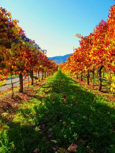 Autumn in Napa Valley