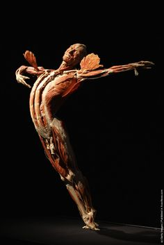 A plastinated human corpse posed to look like a dancer stands on display at the Body Worlds exhibition on April 26, 2011 in Berlin, Germany. The exhibition, which features human and animal corpses plastinated by Gunther von Hagens, focuses on the role of the heart. It will be open to the public at the Postbahnhof from April 27 to August 14. (Photo by Sean Gallup/Getty Images)
