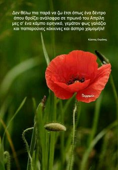 Poetry Quotes, Good Morning, Literature, Cards, Philosophy, Greek, Flowers, Beautiful, Buen Dia