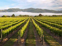 Marlborough, New Zealand - National Geographic Travel Daily Photo New Zealand Wine, Visit New Zealand, Sangria, National Geographic Travel, Wine Vineyards, Italian Wine, Daily Photo, Wine Country, Mists