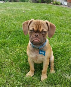 Grumpy Cat… Meet Grumpy DOG | St. Kitts, VIRALS Viral Randomness… There's always a double for everyone out there, including animals…