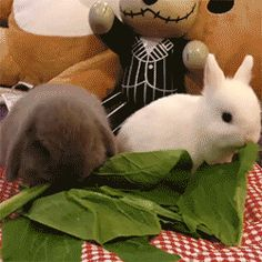 o.k. I seriously think this amount of cuteness could very well give me a heart attack!!!! *EEEP!!!* BUNNIES!!!! <3 <3 <3