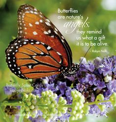 """""""Butterflies are nature's angels, they remind us what a gift it is to be alive."""" -Robyn Nola"""