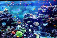 Cool Fish Tank Ideas for Your Home - Expert Aquarist Marine Fish Tanks, Marine Tank, Marine Aquarium, Saltwater Aquarium, Freshwater Aquarium, Aquarium Live Wallpaper, Tank Wallpaper, Aquarium Backgrounds, Aquarium Lamp
