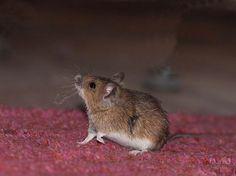Dit hadden we eerder moeten weten! Hoewel muizen er best lief uit zien, hebben we die kleine knaagdieren liever niet in huis. D... Wie Macht Man, Raising Chickens, Diy Projects To Try, Good To Know, Animals And Pets, Helpful Hints, Diy And Crafts, Life Hacks, Kitty